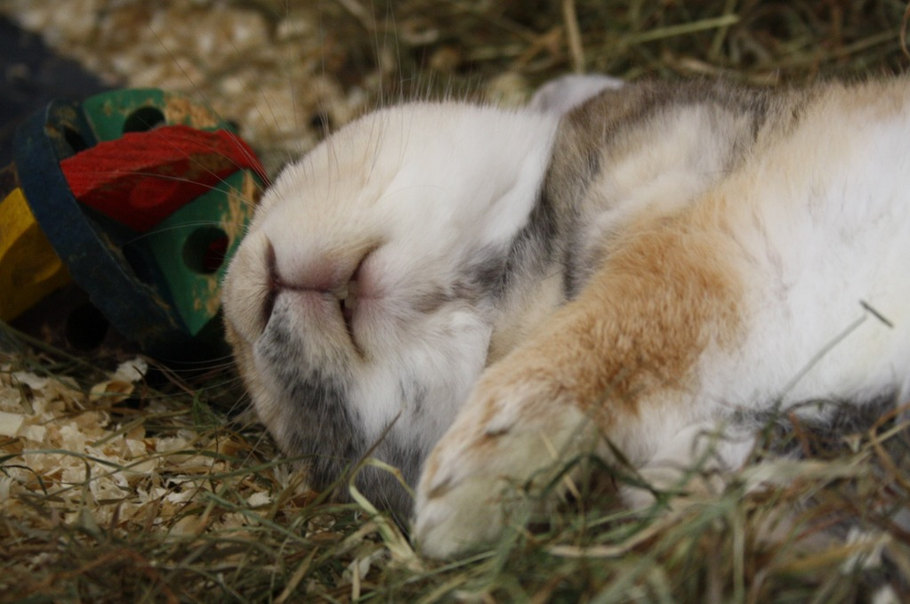 Bunny Is Conked Out