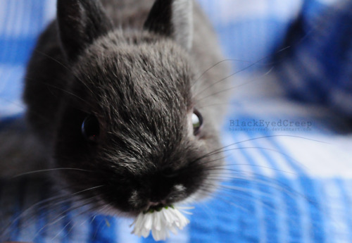 Bunny Will Look You Right in the Eye