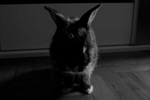 Bunny Is Feeling a Bit Moody Today