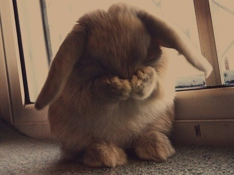Bunny You Look Embarrassed. What Did You Do?