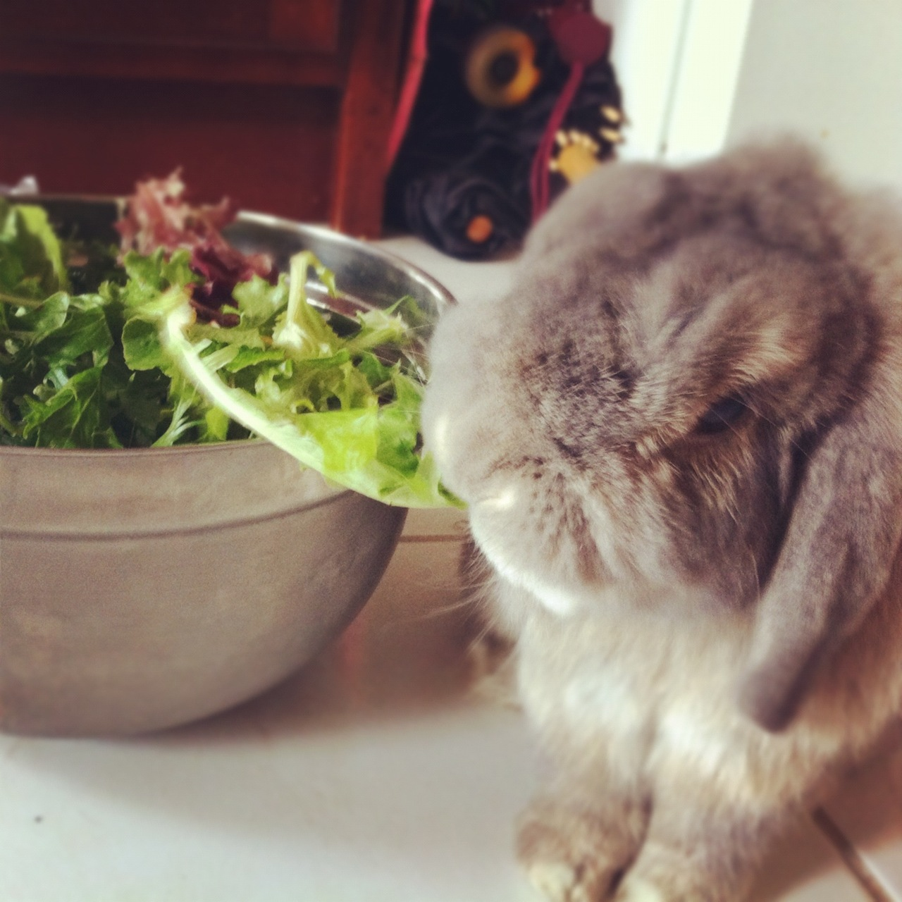 You Made a Salad? Don't Mind If I Do!
