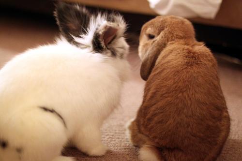 Bunnies Are Best Friends