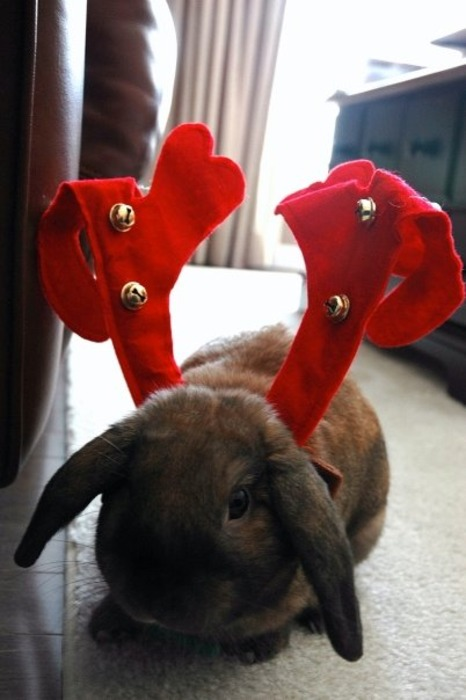 Bunny Wants to Join the Sleigh Reindeers