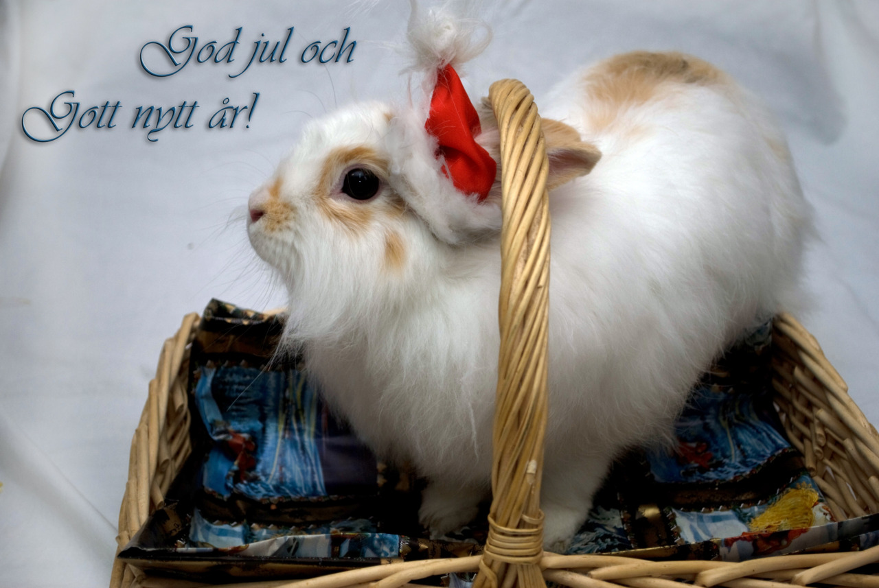Swedish Bunny Wishes You a Happy New Year