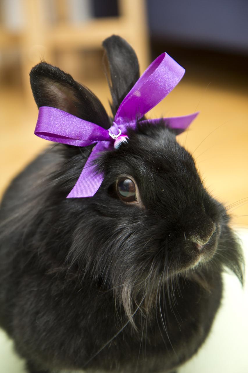 Bunny Likes to Feel Feminine