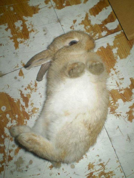 Bunny Rolls Around on the Floor