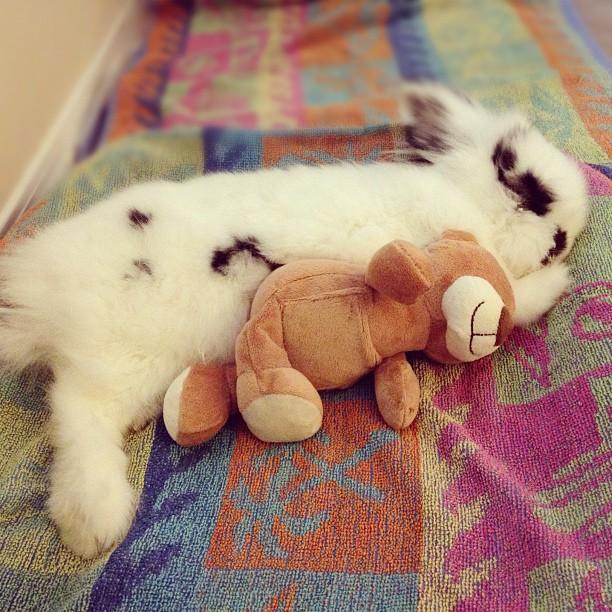 Bunny Naps with a Stuffed Friend