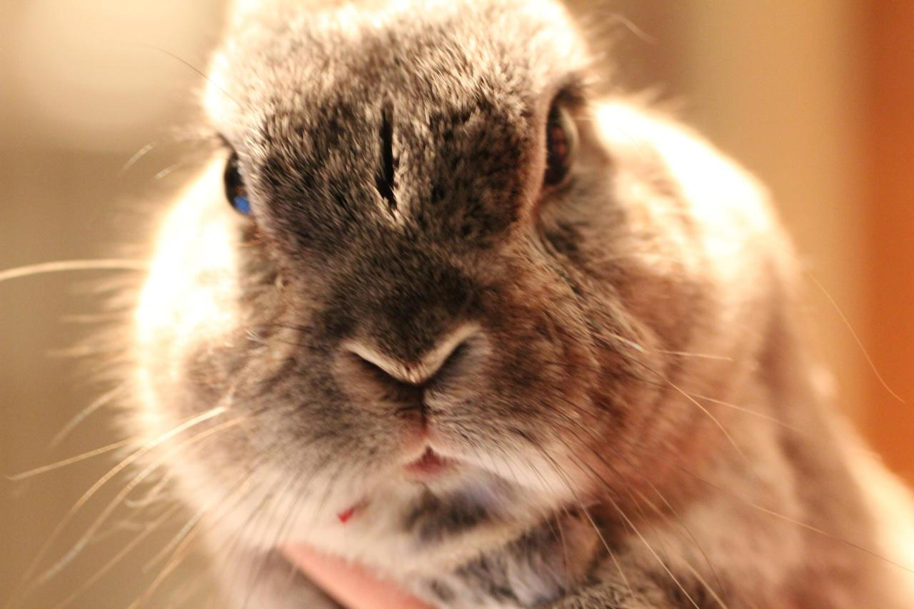 The Ultimate in Bunny Disapproval