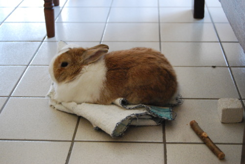 Bunny Rests on Her Carpet Island
