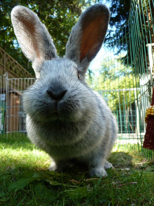 Bunny Is on a Senses Mission with Those Whiskers and Ears
