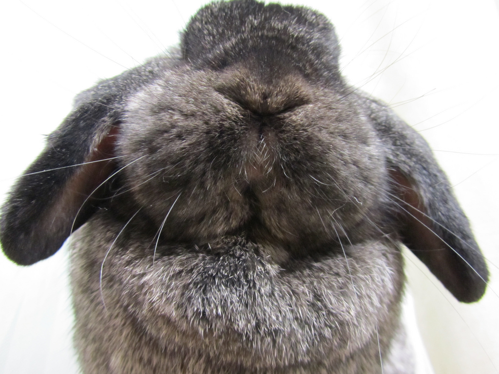 Now THOSE Are Some Bunny Cheeks!
