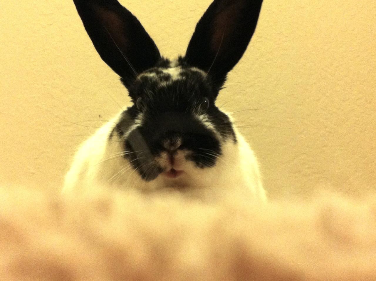 Bunny Plays Peek-a-Boo 2