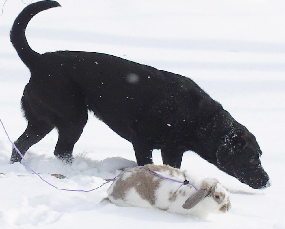 Bunny Gives Dog Carrot Hunting Lessons