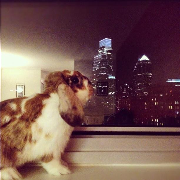 Adventurous Bunny Longs to Explore the World