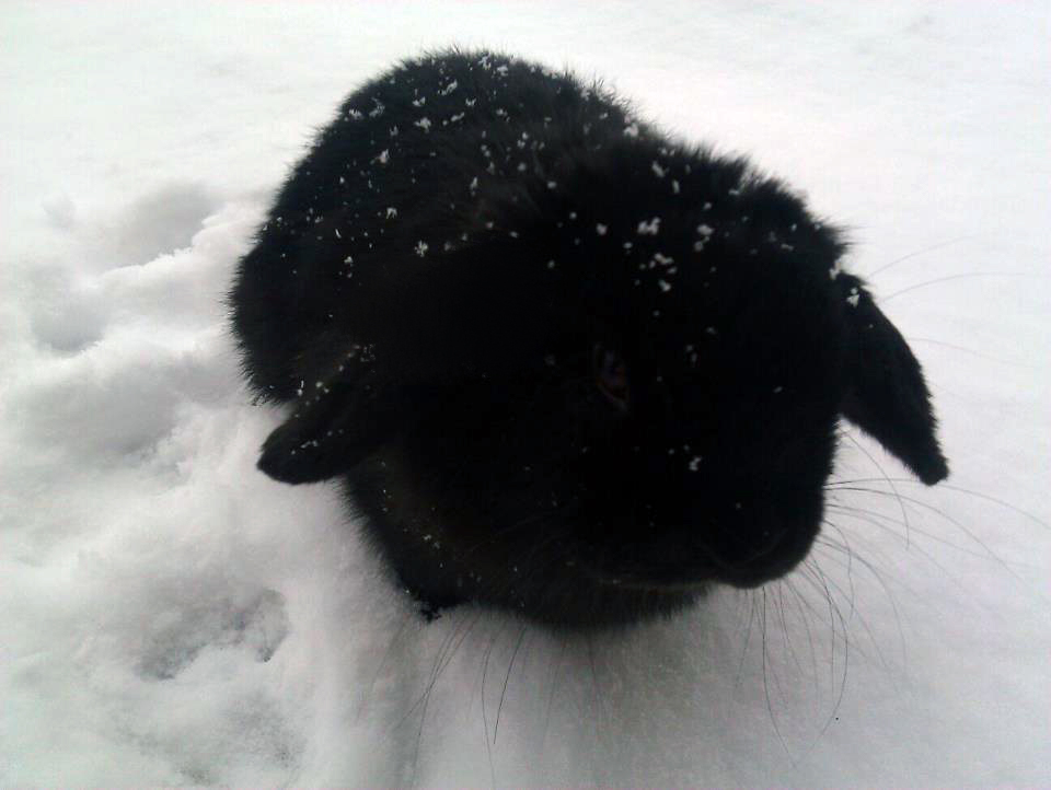 Bunny Will Not Be Able to Hide in the Snow
