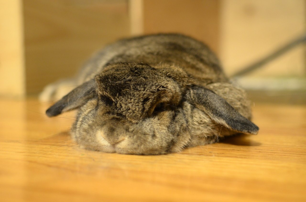 Bunny Relaxes into the Floor