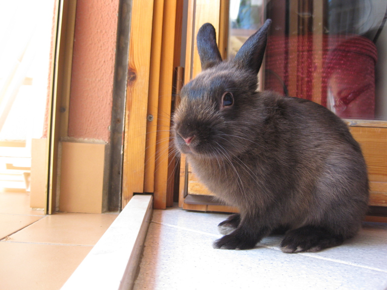 Bunny Hesitates to Go Outside; Someone May Open Up the Fridge in the Meantime!