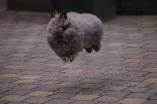 Hover Bunny
