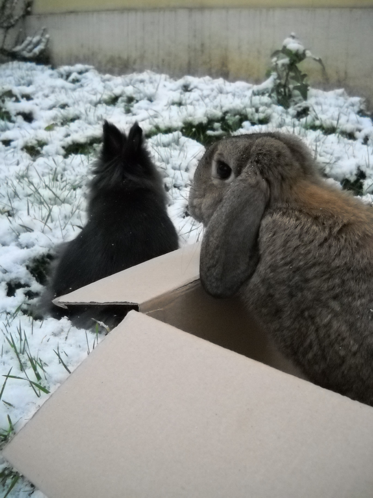 Bunny Sends a Scout into the Snow; Scout Bunny Reports All Is Well 1