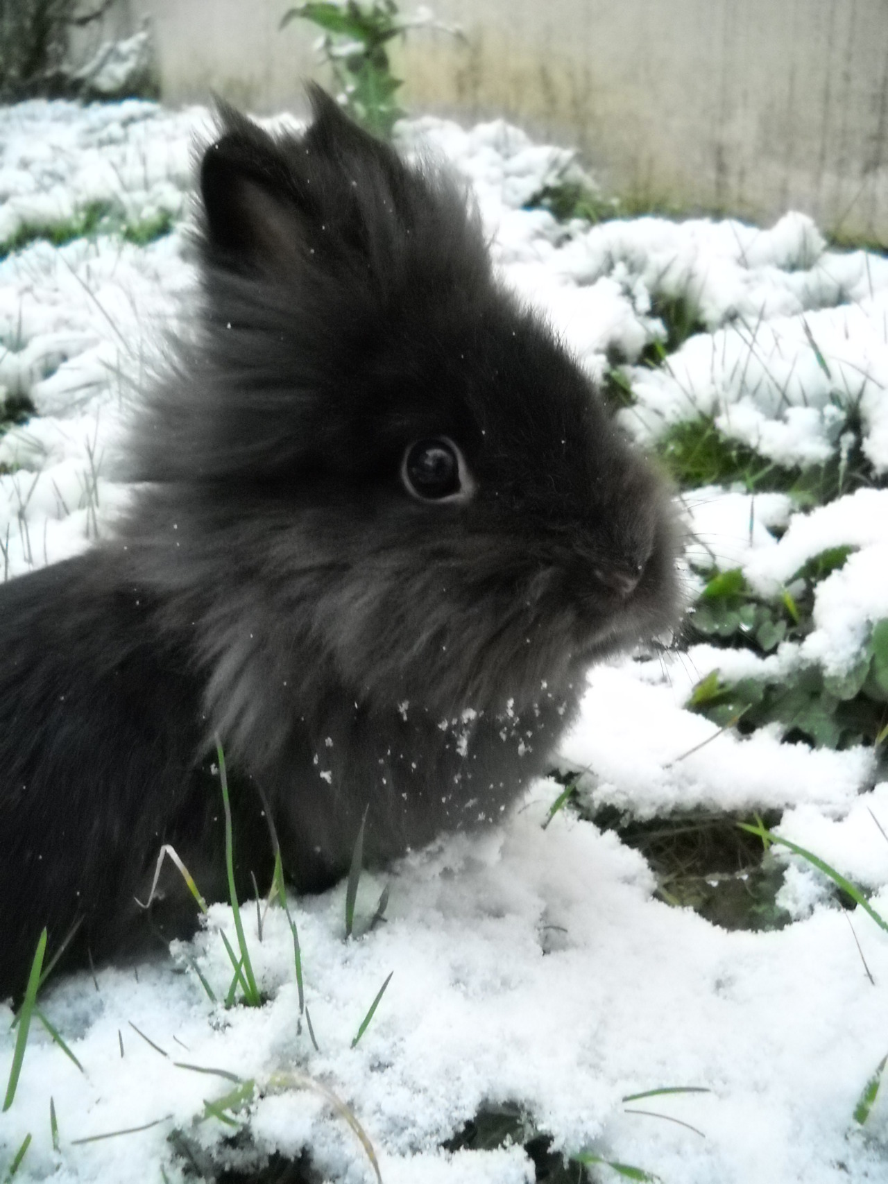 Bunny Sends a Scout into the Snow; Scout Bunny Reports All Is Well 2