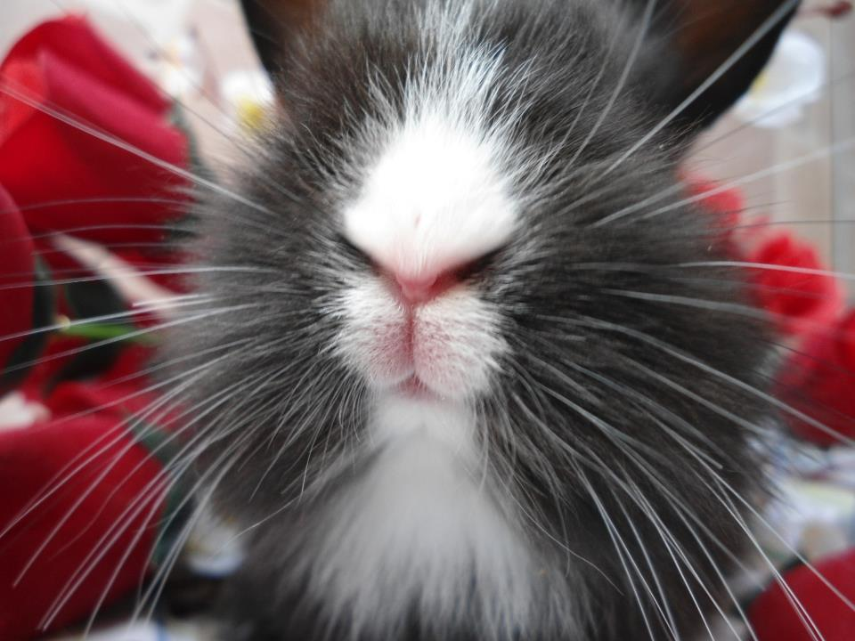 Bunny's Whiskers Are Long and Plentiful