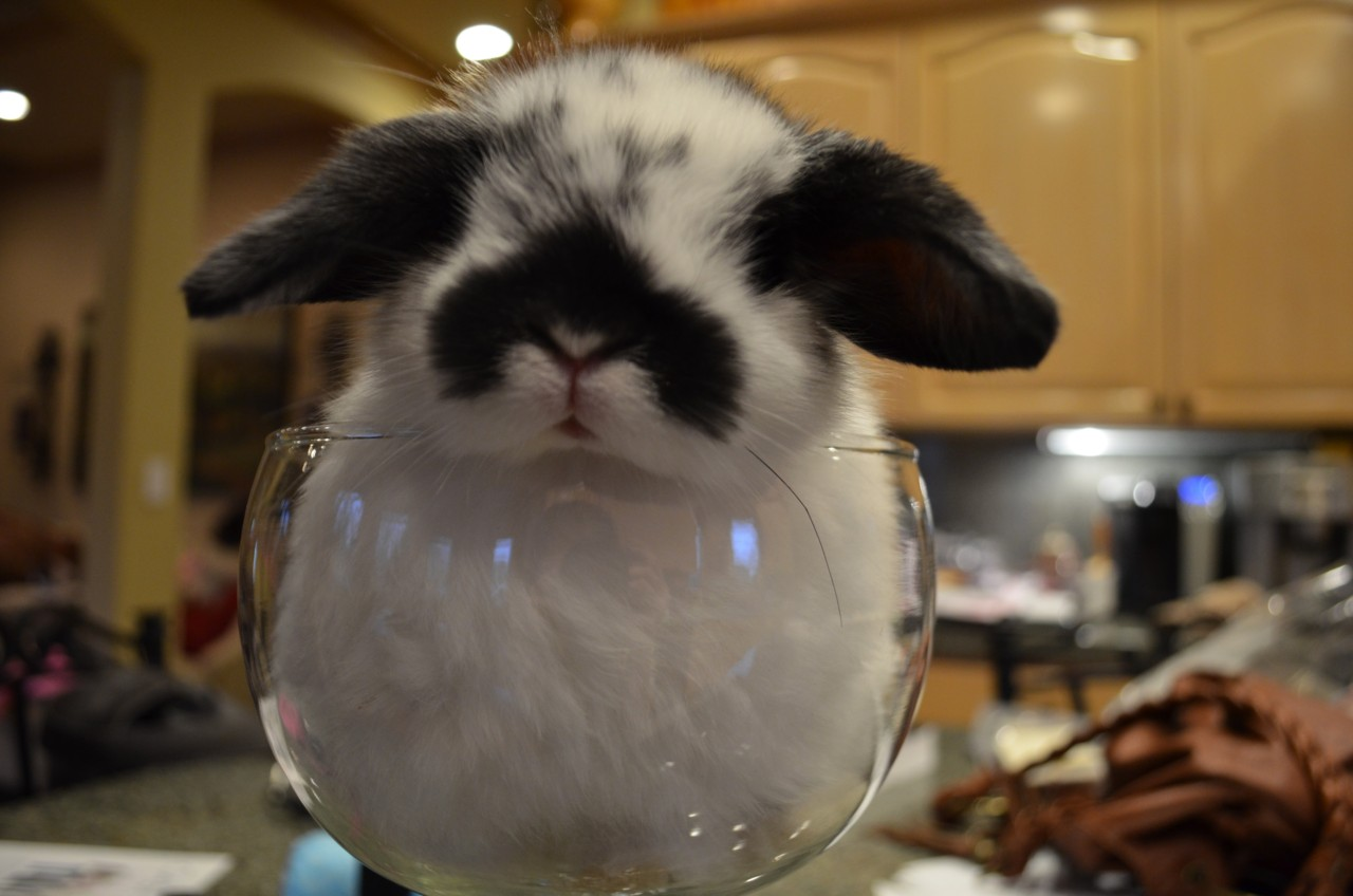 Waiter! There's a Hare in My Wine Glass!