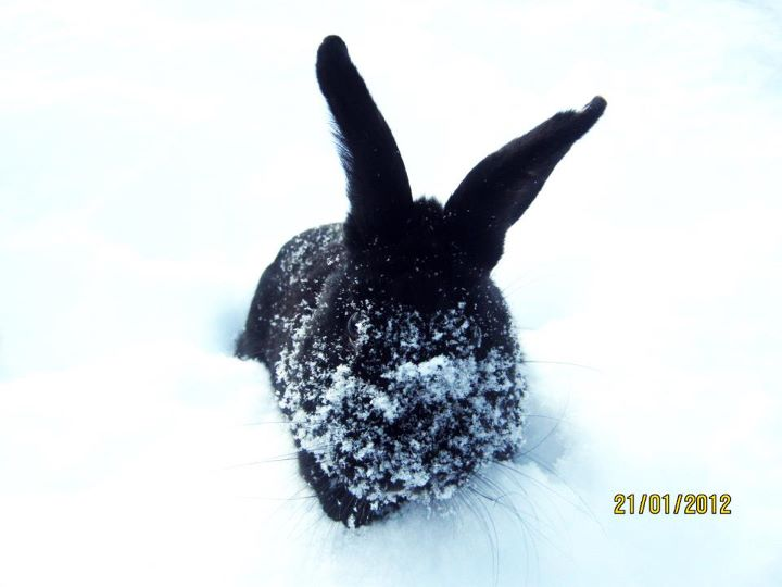Bunny Has Snow on Her Face
