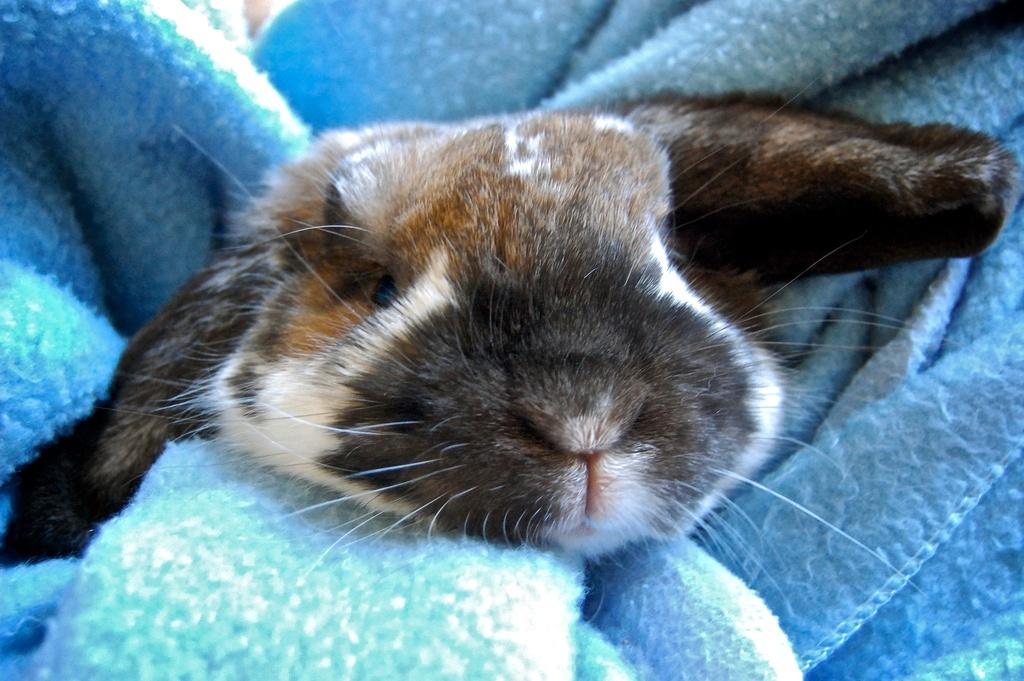 Bunny Is Snug as a Bug in a Rug