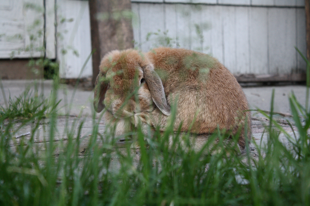 Bunny Makes Last-Minute Adjustments to Her Feet Before a Romp through the Grass