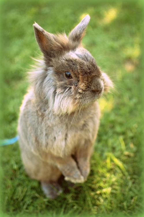 Bunny Surveys His Domain