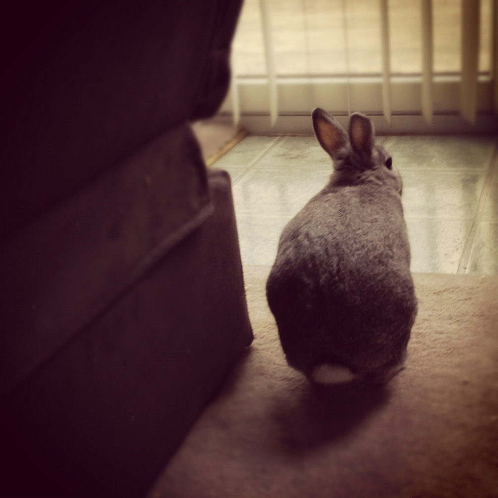 Bunny Gives You the Cold Shoulder… Unless You Have Banana