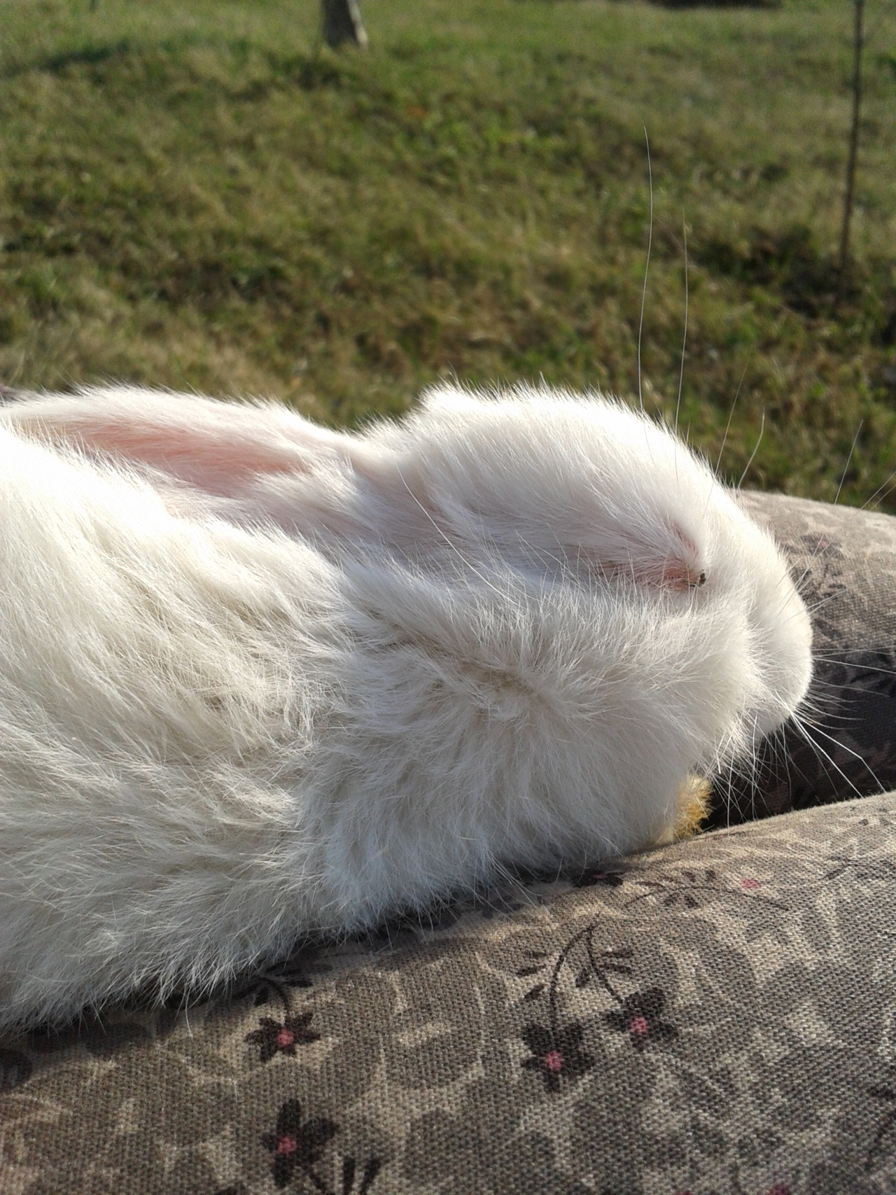 Bunny Takes a Lap Nap in the Sunshine