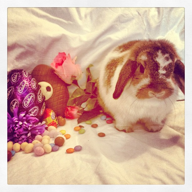 Bunny Wonders Where HER Easter Treats Are