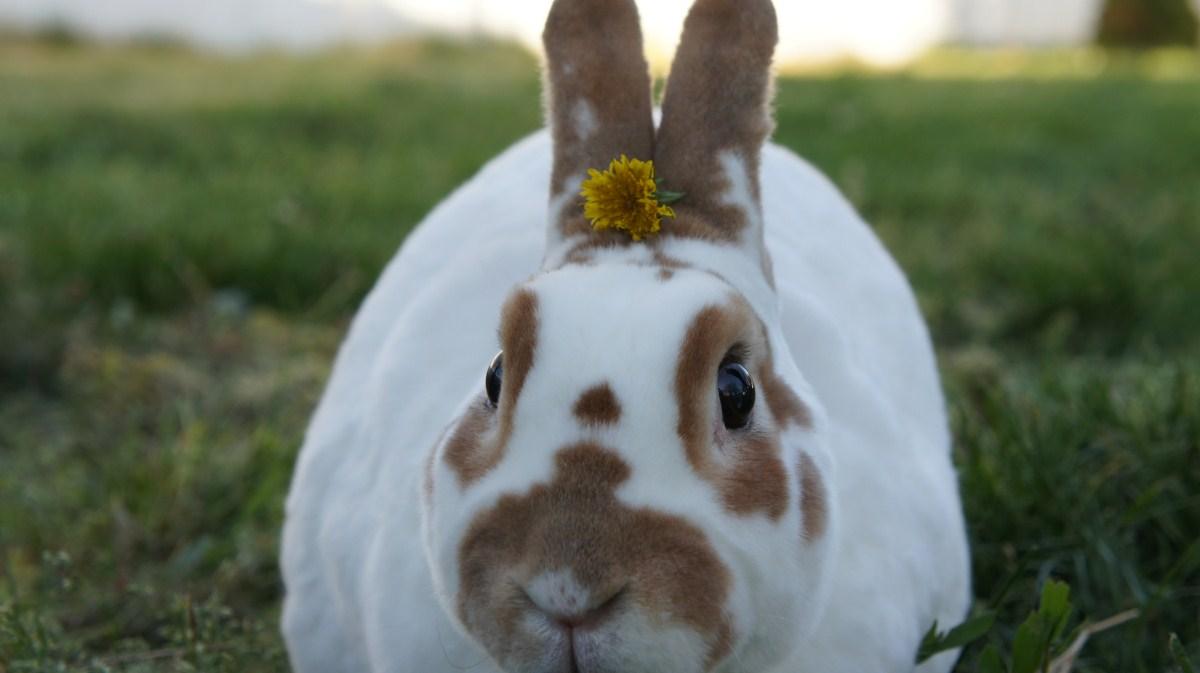 Now Bunny Is Even Prettier