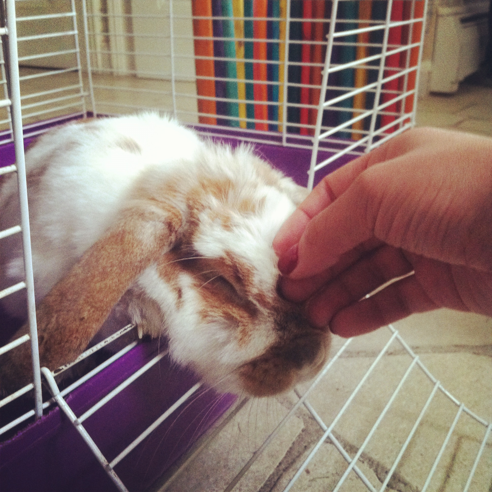 Bunny Will Accept Your Head Scratches