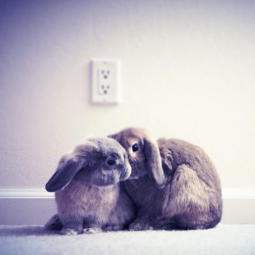 Bunnies Exchange Secrets