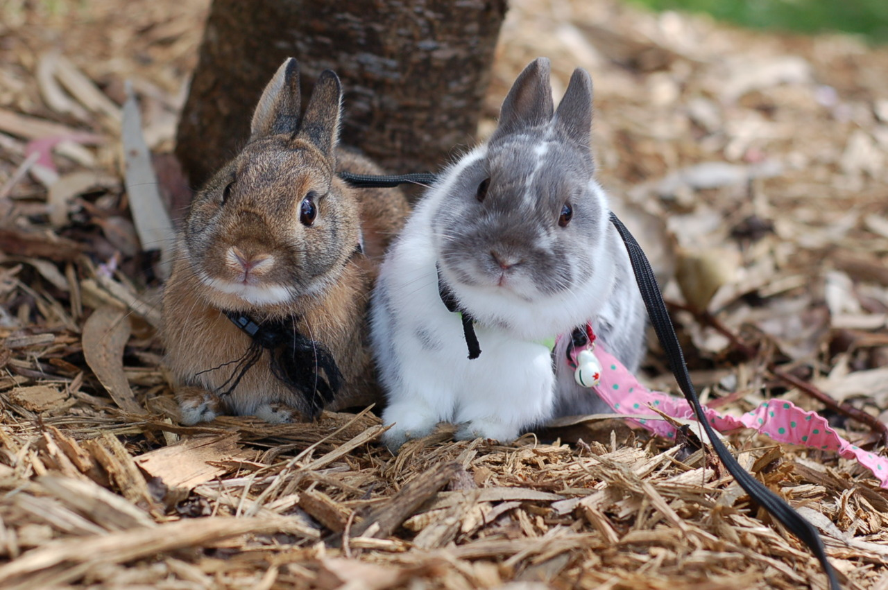 Bunnies' Philosophy: When In the Garden, Lean as the Trees Lean