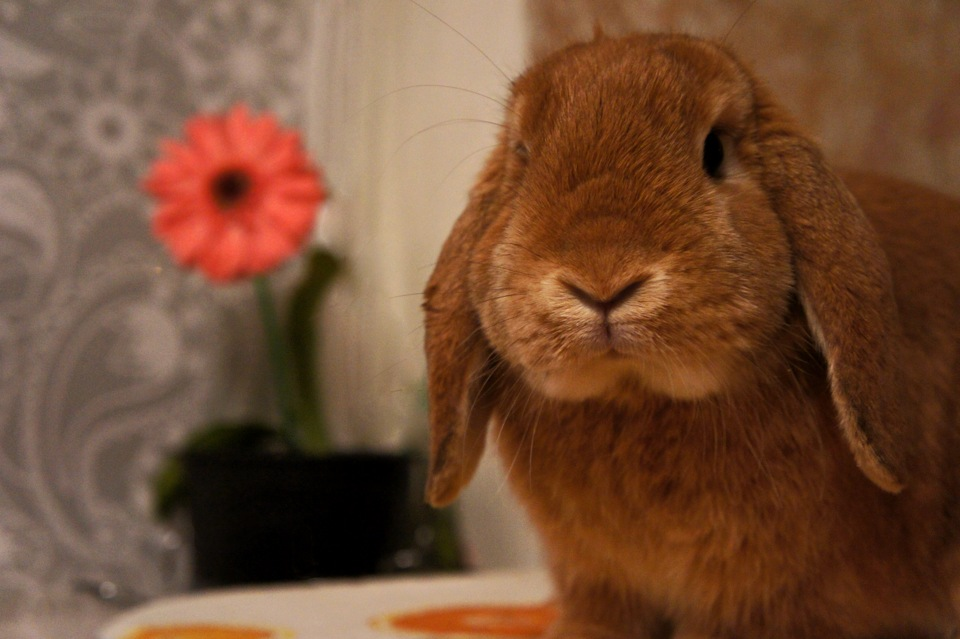 Bunny Will Sit for a Picture