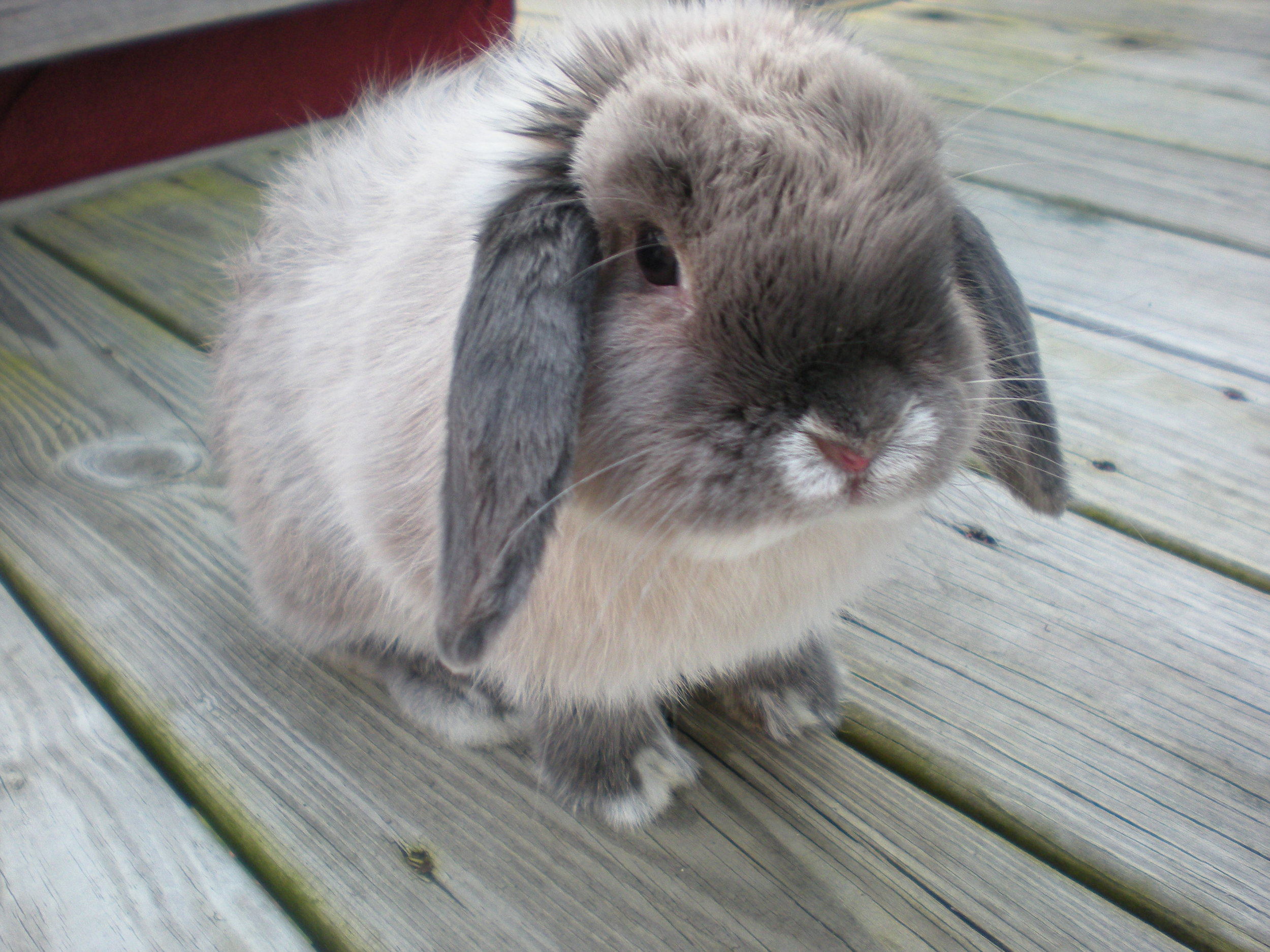 Bunny Is Round and Fluffy