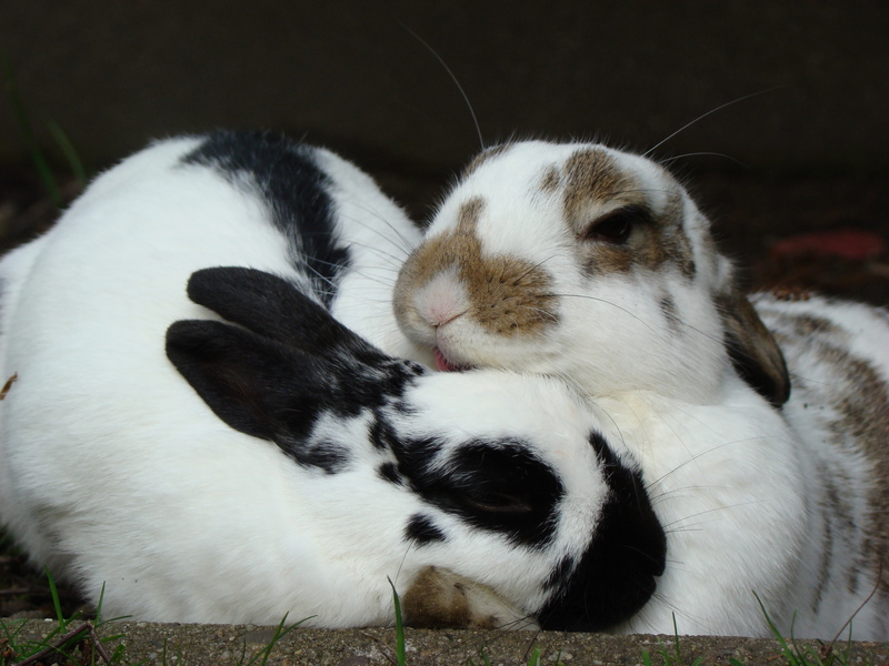 Bunny Gets Some Grooming Help from a Friend