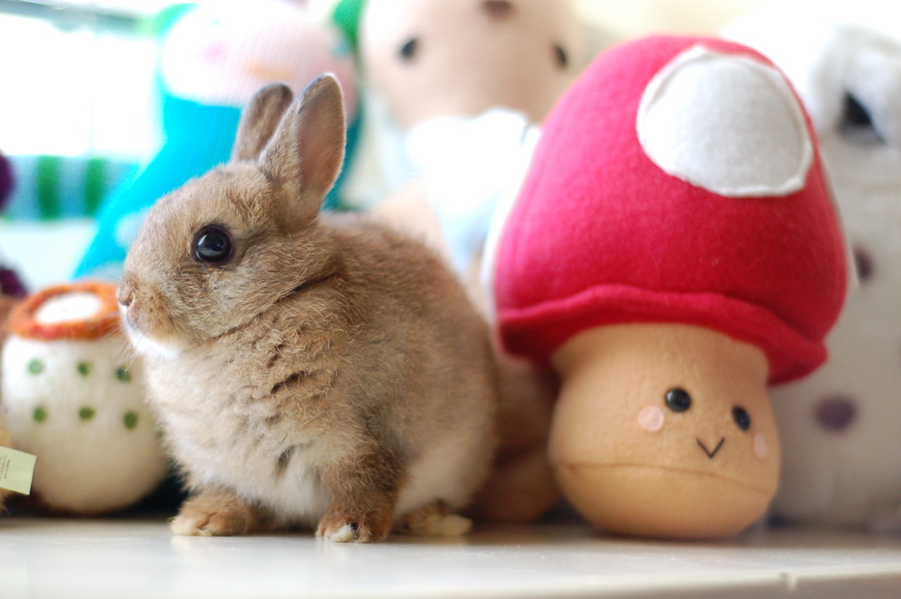 Bunny Found a Super Mushroom!
