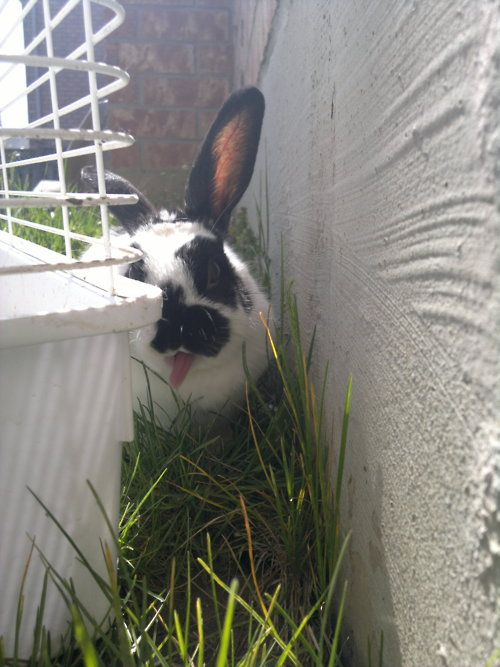 Bunny Does Her Gene Simmons Impression