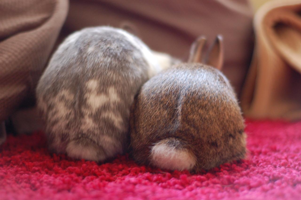 Round Fuzzy Bunny Bums