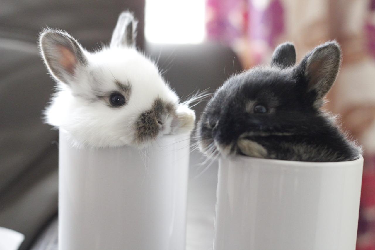 Care for a Mug of Bun?