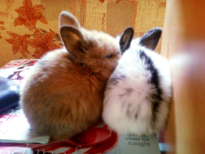 Sleepy Bunnies Nuzzle before a Nap