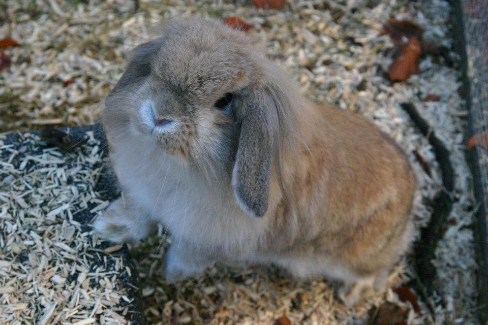 Bunny Looks to Have a Sweet Disposition