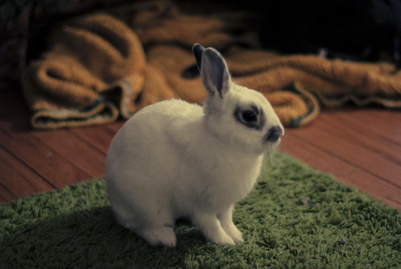 Bunny in Profile