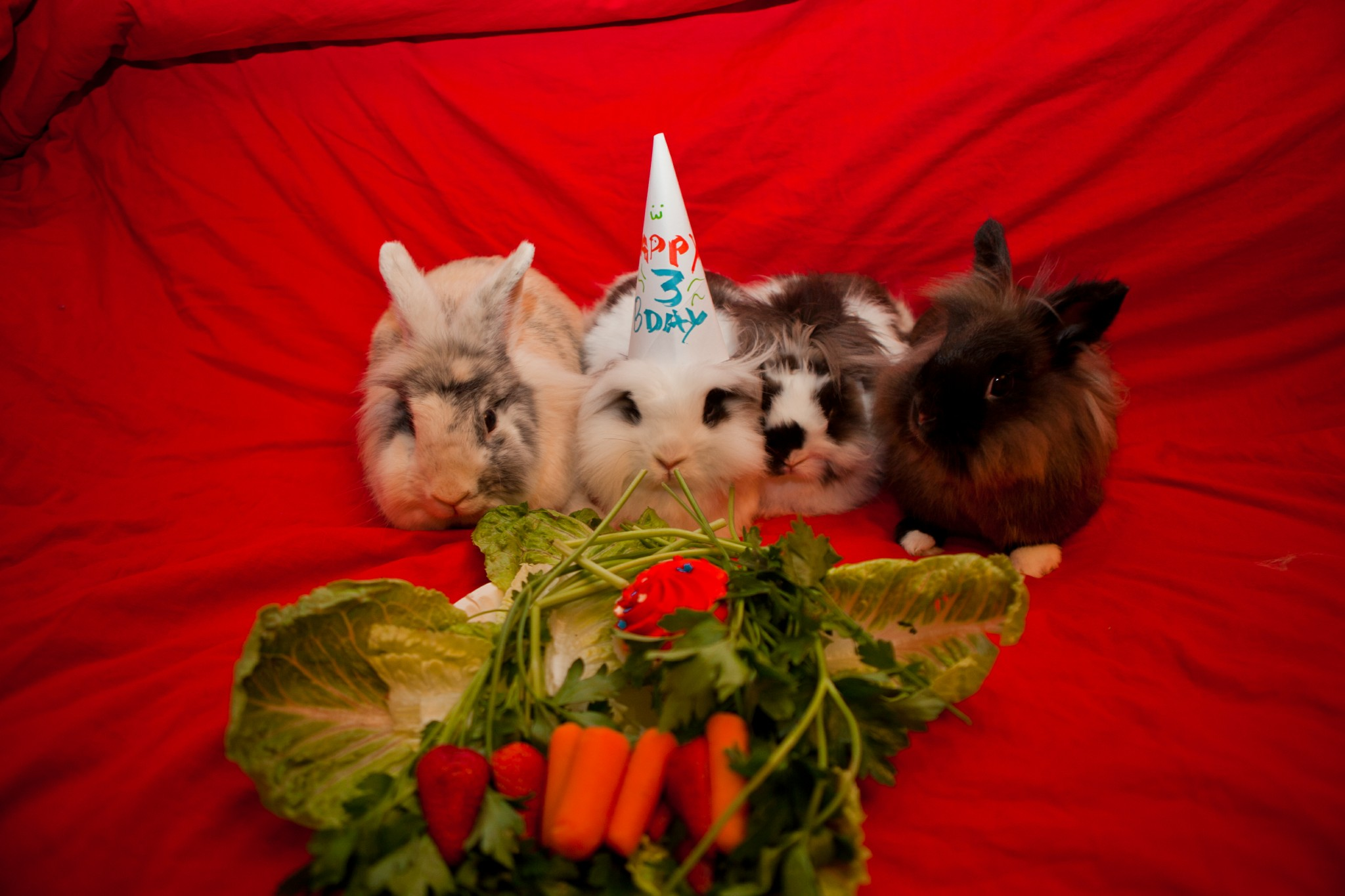 Bunny's Birthday Party Is a Success!
