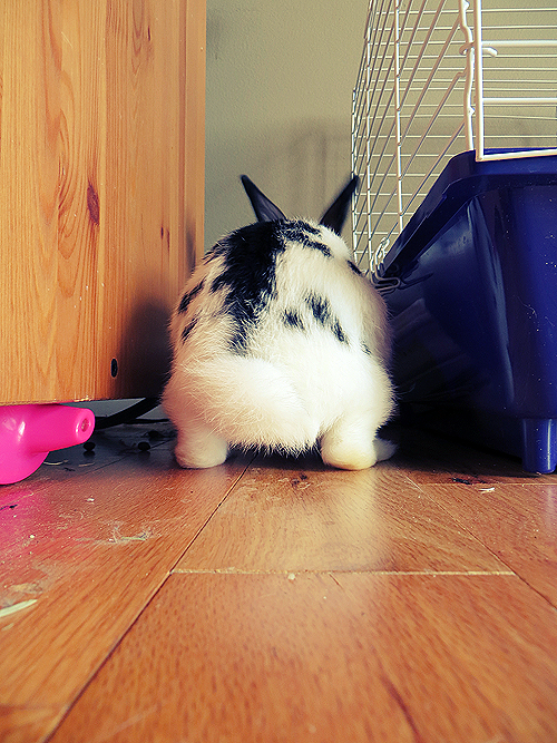 Bunny Looks Poised to Start Digging
