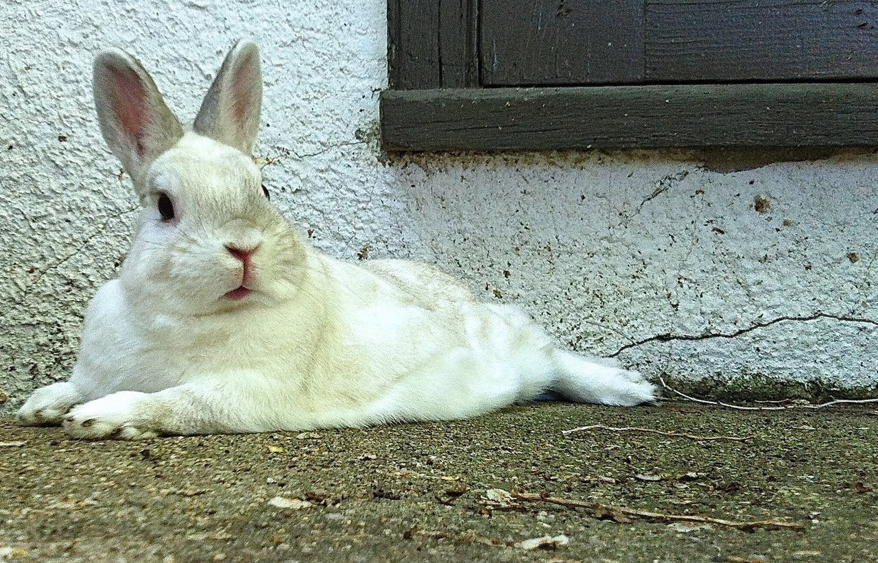 Even at Rest Bunny Is Alert